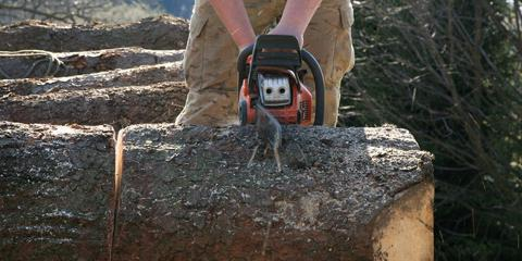 5 Reasons to Hire the Professionals for Dead Tree Removal, St. Charles, Missouri