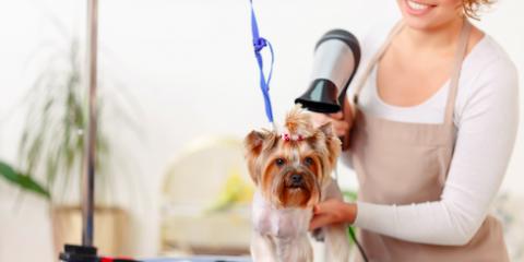3 Advantages of Mobile Pet Grooming, Hamilton, Ohio