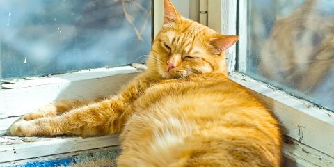Mobile Veterinarian Shares 5 Ways to Keep Your Pets at a Healthy Weight, Bainbridge Island, Washington