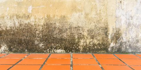 Why You Must Schedule Mold & Mildew Remediation Immediately, Columbus, North Carolina