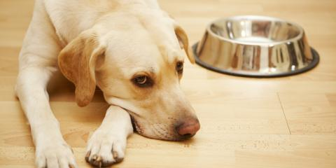 3 Signs Your Pet Might Be Exposed to Mold, Whitefish, Montana