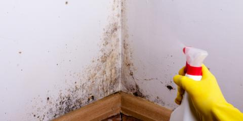 3 Signs You Need a Mold Inspection at Your House, Stamford, Connecticut