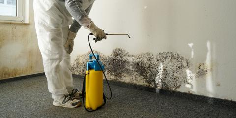 Don't Ignore These 3 Signs That Signify the Need for Mold Remediation, Shenandoah, West Virginia
