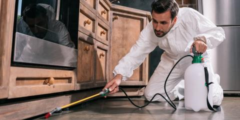 5 Steps to Expect From Mold Remediation Services, Dothan, Alabama