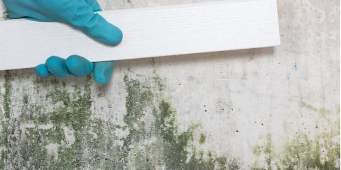 3 Common Places for Mold to Grow at Home, Russellville, Arkansas