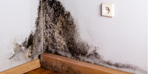 3 Times Mold Removal Might Be Necessary in Your Home, Fairfax, Ohio