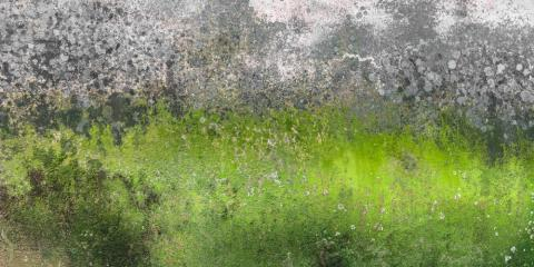 Ask Mold Removal Experts: How Mold Enters Your Home's Insulation, Anderson, Ohio