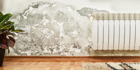 Mold Removal Experts Explain 3 Types of Mold Found in Homes, Gulf Shores, Alabama