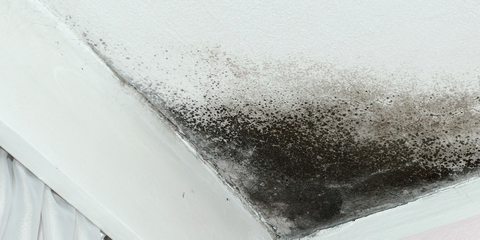 Think Your House Has Mold? Heed This Advice From Honolulu's Mold Removal Experts, Honolulu, Hawaii