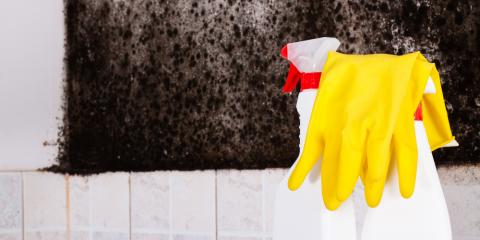 Mold: What to Ask Before Hiring a Mold Removal Company, Sharonville, Ohio
