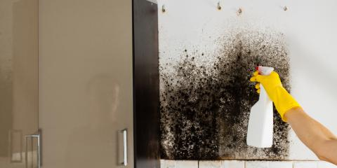 4 Signs It's Time to Call a Mold Removal Specialist, Evergreen, Montana