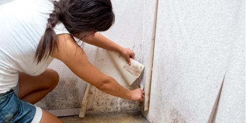 3 Common Types of Indoor Mold, Paradise, Nevada