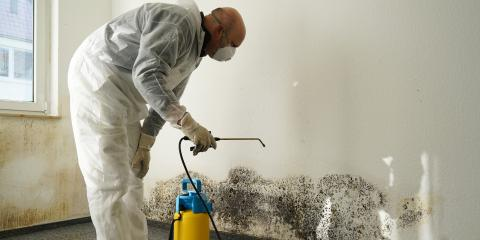 FAQ: Concord's Trusted Mold Remover Explains What You Need to Know About Mold Remediation , Poplar Tent, North Carolina