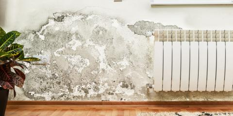 3 Common Signs You Need Mold Remediation Services, Plover, Wisconsin
