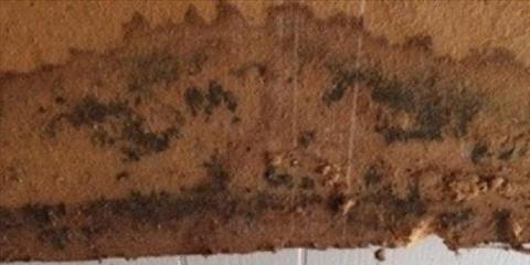 Overview of Mold From St. Augustine's Premier Mold Remediation & Water Damage Experts, St. Augustine, Florida
