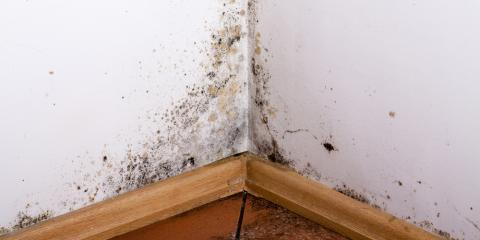 Experts Explain the Mold Inspection & Removal Process, Charlotte, North Carolina