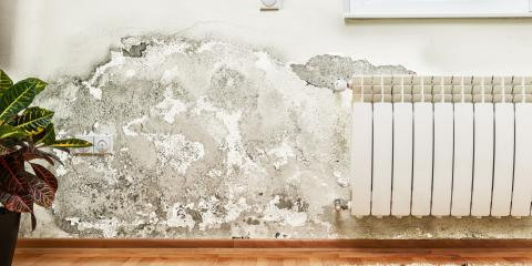 Ballwin's Mold Damage Restoration Team Discusses Signs Your Home May Have Mold, Fenton, Missouri