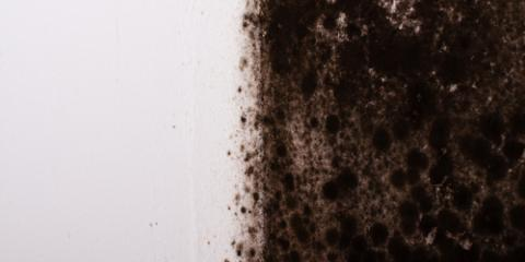 Your Winter Mold Removal Guide From Rainbow Environmental Services, Fairfax, Ohio