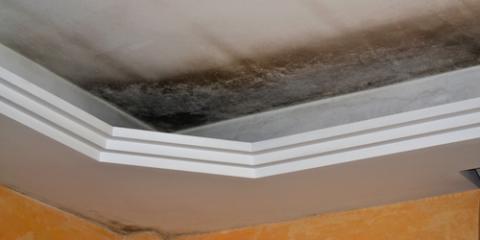 4 FAQ About Mold Control & Remediation, Jefferson, Missouri