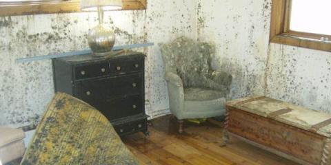 When Mold Appears, Trust ServiceMaster To Handle The Disaster Restoration, Englewood, Colorado