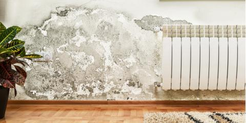 3 Ways Mold & Mildew Can Affect Your Health, Wailuku, Hawaii