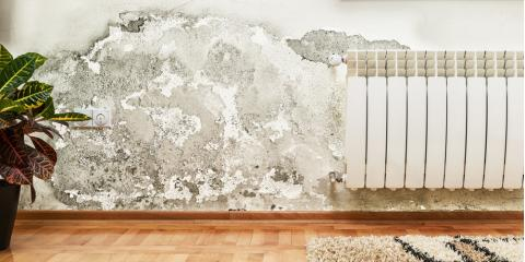3 Reasons Why Mold Remediation Is Important, Lexington-Fayette, Kentucky