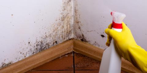 Top 4 Reasons to Hire Professional Mold Remediation Experts, Fenton, Missouri