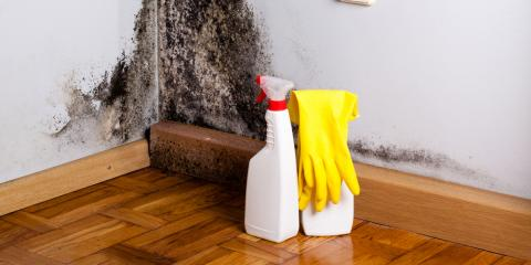 A Homeowner's Guide to the Mold Remediation Process, Shepherdsville, Kentucky