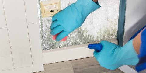 5 Culprits Behind the Need for Mold Removal, ,
