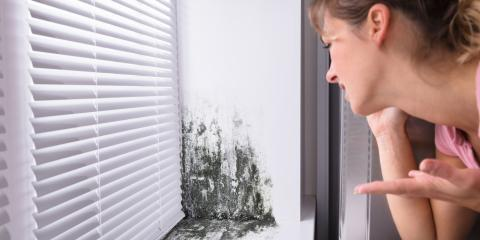What to Do if You Find Mold in Your Rental Property, Shenandoah, West Virginia