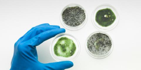 When Should You Have Mold Testing Done?, Rochester, Minnesota
