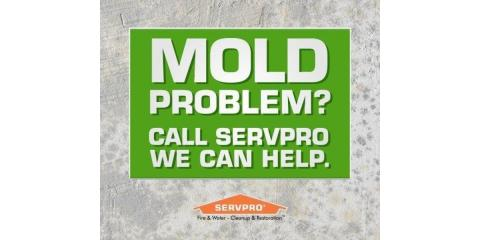 Mold Remediation Pros Warn Against 3 Common Types of Household Fungi , Rochester, New York