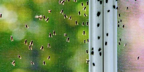 Monmouth Termite & Pest Control, Pest Control, Services, Galesburg, Illinois