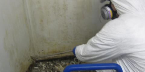 The 4 Crucial Principles of Mold Remediation From Big Mountain Insulators, Whitefish, Montana