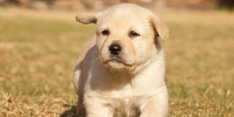 Do's & Don'ts of Potty Training a New Puppy, Montgomery, New York