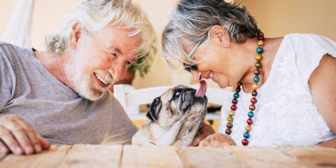 3 Tips for Taking Care of a Senior Dog, ,
