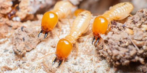 5 Ways to Protect Your Home Against Termites, Linden, Texas