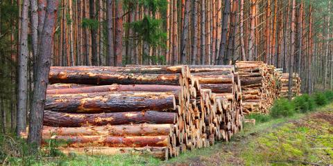 Frequently Asked Questions About Logging, Morehead, Kentucky