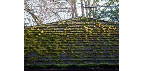3 Tips About Preventing Algae With Roof Treatments, Vernon, New Jersey