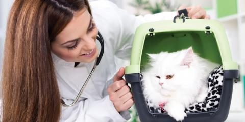 How to Find a Reliable Veterinarian, Mount Washington, Kentucky