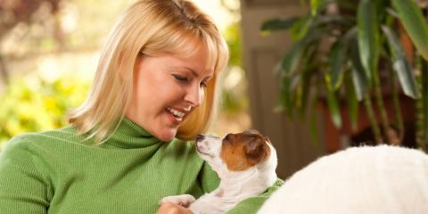4 Common Health Problems in Small Breed Dogs, Mount Washington, Kentucky