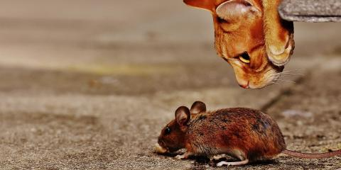 A Guide to Mice Invasion & Pest Control in Your Home, Rochester, New York