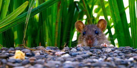 3 Signs You Need a Mouse Extermination Company, Lexington-Fayette, Kentucky