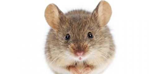 Avoid a Winter Rodent Infestation With These Pest Control Tips, Columbus, North Carolina