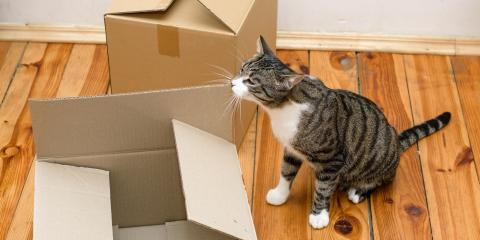 3 Tips for Moving With Pets, Green, Ohio
