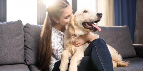 3 Tips for Moving With Pets, Cincinnati, Ohio