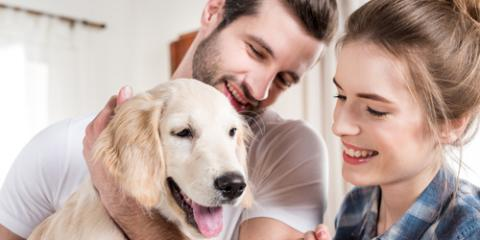 3 Actions to Take While Moving With Pets, Monroe, New York