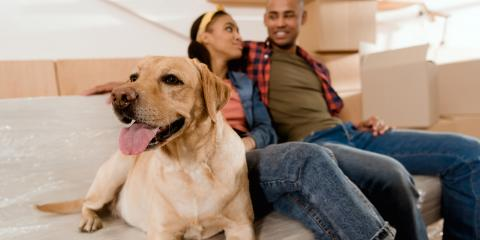 3 Tips to Help Your Pet Transition After Moving, Ewa, Hawaii