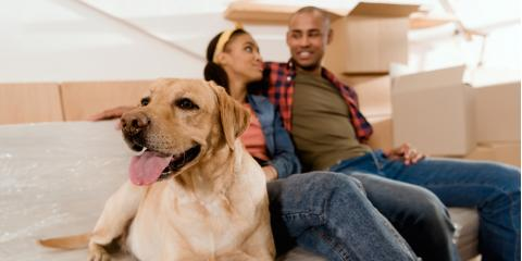 How to Move Safely With Your Pets, Cincinnati, Ohio
