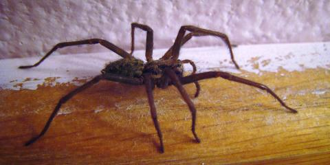 Get Rid of Spiders in Your Home With M&T Termite & Pest